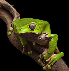 violently-purging-frog-poison-600x315.pn