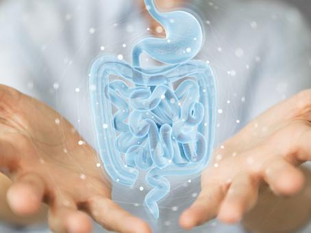 La flore intestinale : un ventre sain pour une vie saine !