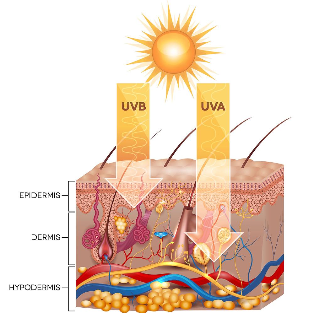 Absorption des UVB et UVA