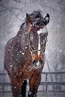 paard in de winter.jpg