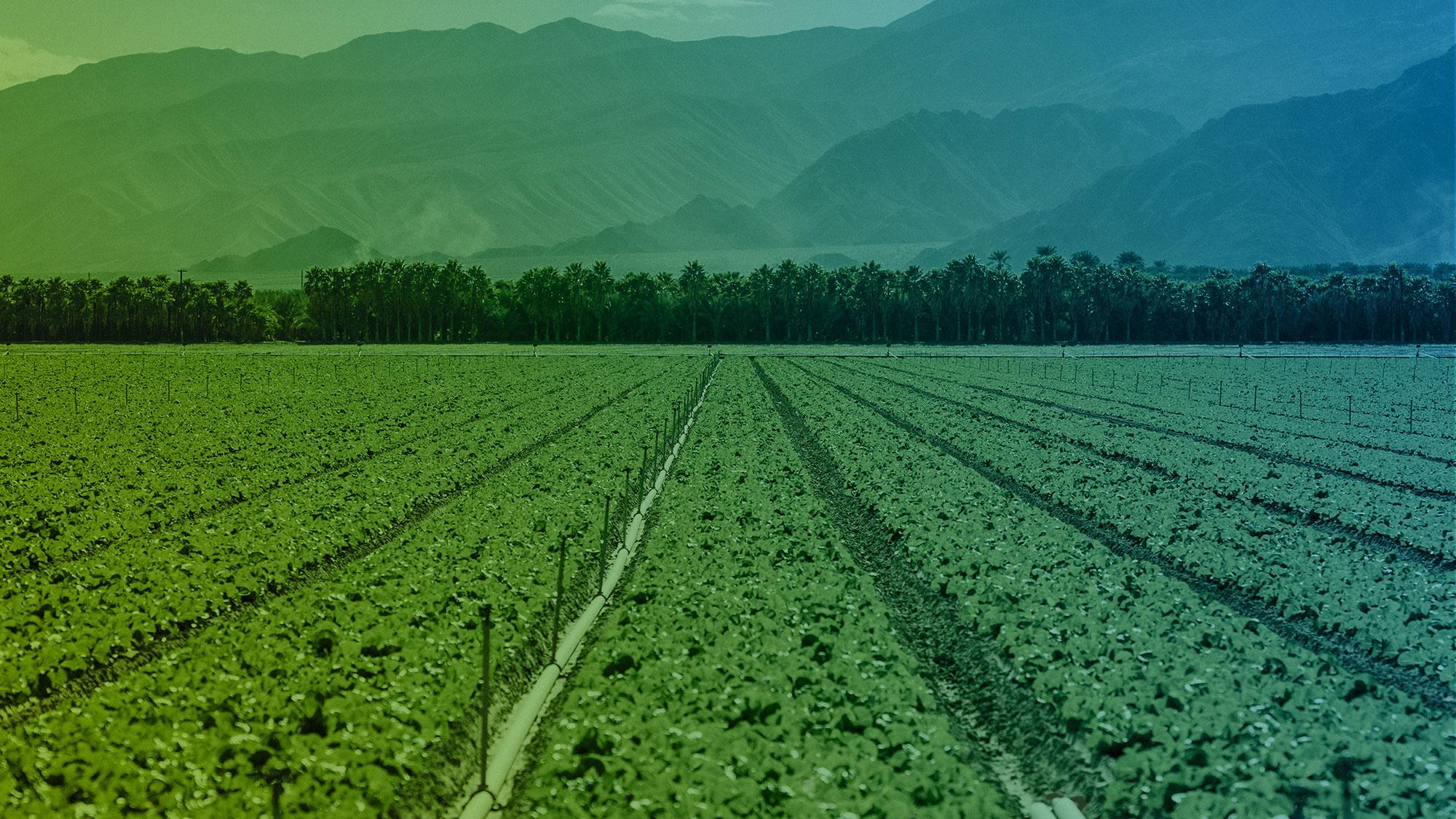 Agroindustria Econegocios