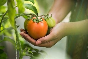Agroindustria-Econegocios_1.jpg