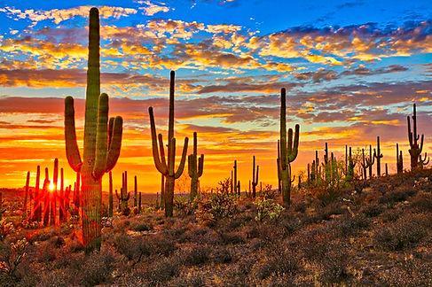 Cactus-9bc1cee27cff.jpg