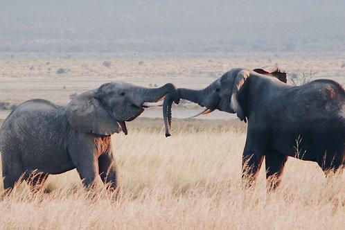 Two Elephants Photo Print