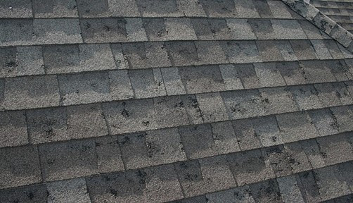 Image result for hail damage shingles. Architectural shingles with hail damage. Granule Loss, Cracks, exposed fiberglass mat, fractured fiberglass mat, loosening on the seal strip