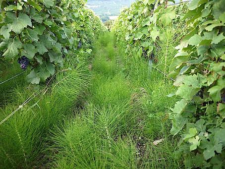 Améliorer nos sols grâce aux Mauvaises Herbes ?!…