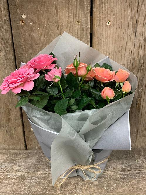 Rose Plant Duo