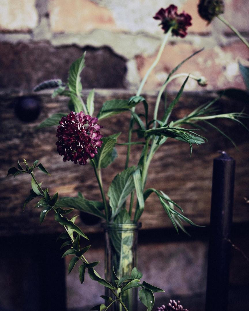 Close up of flower stem in vintage vase