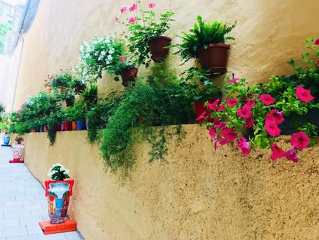 Finding florals around the world