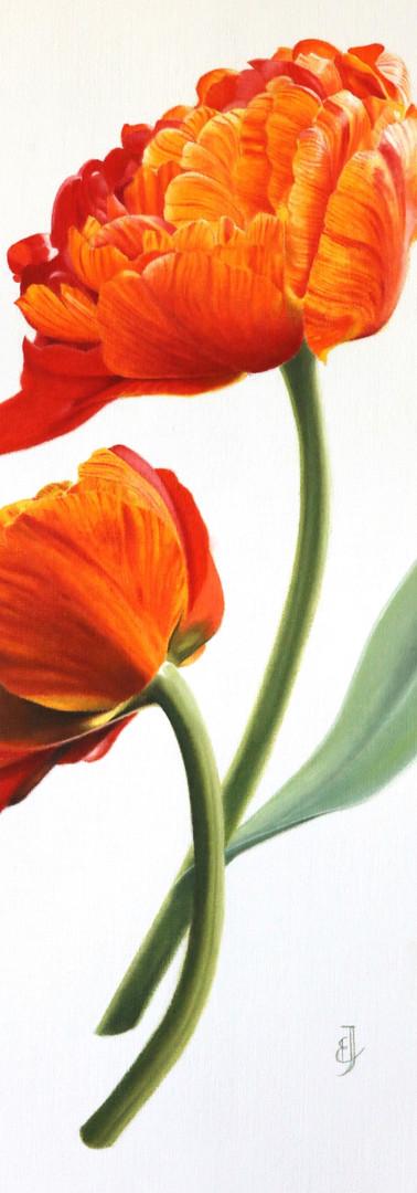 Tulipa Sun Lover - oil.jpg