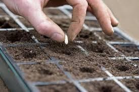 Comment effectuer les semis de légumes, de fines herbes et de fleurs comestibles?