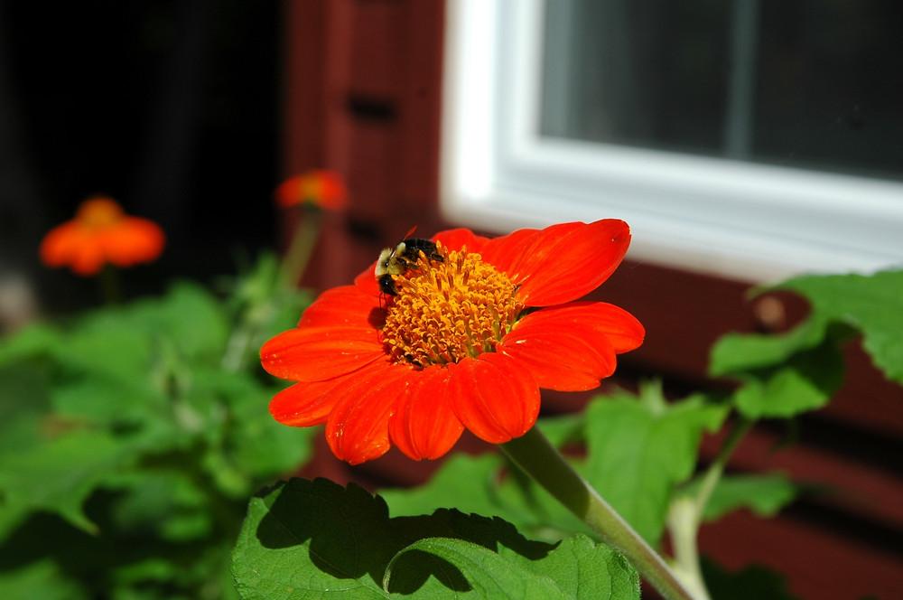 Comment attirer les pollinisateurs et éloigner les insectes nuisibles?
