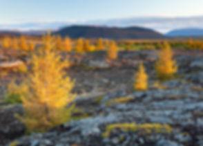 Myvatn in Iceland