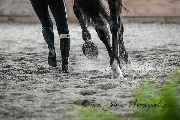 Rider and Horse_Close up.jpg
