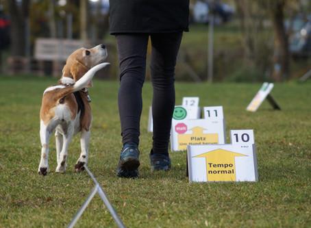 Landesmeisterschaft Rally Obedience