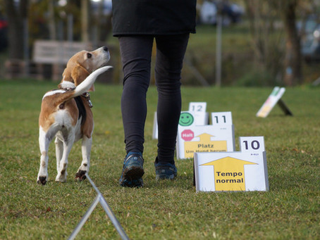 Landesmeisterschaft Rally Obedience