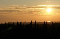 La Torretta 42_nach der Ernte
