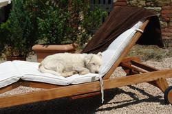 La Torretta 42_Snoopy