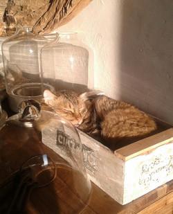 La Torretta 42_Fridulin in der Kiste