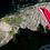 Thumbnail: XXS and XS GIN Explorer