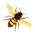bee_PNG74667_edited.png