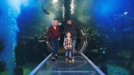 The Sea Life Centre