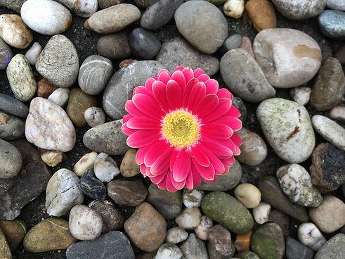 bloemetje30-04-2021.JPG