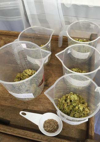 More hops.jpg