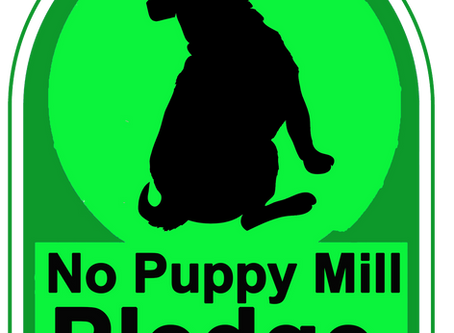 Puppy Mills are harmful no matter how you define them.