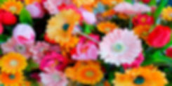 Floral assortment 6 x 3.jpg