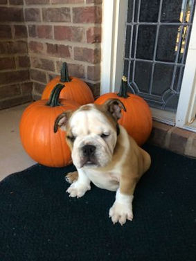 dog with pumpkin.jpg