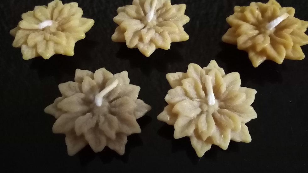 """Bougies """"Edelweiss"""" x 5 - Cire d'abeilles"""