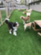 front play area misty glen doggie day ca