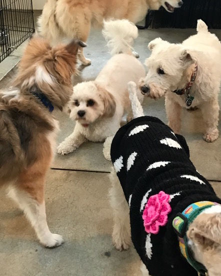 Little Dog Day Camp (Under 40 lbs)