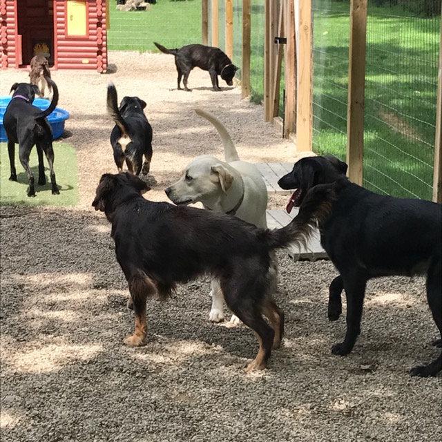 Big Dog Camp (40 pounds +)