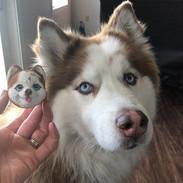 Custom Pet Shiba Inu