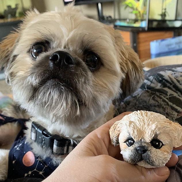 Custom Pet Shih Tzu