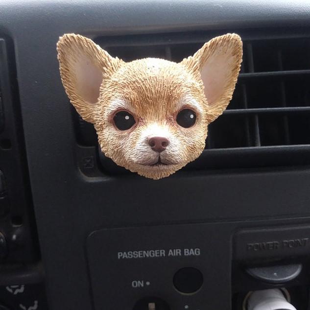 Custom Pet Chihuahua