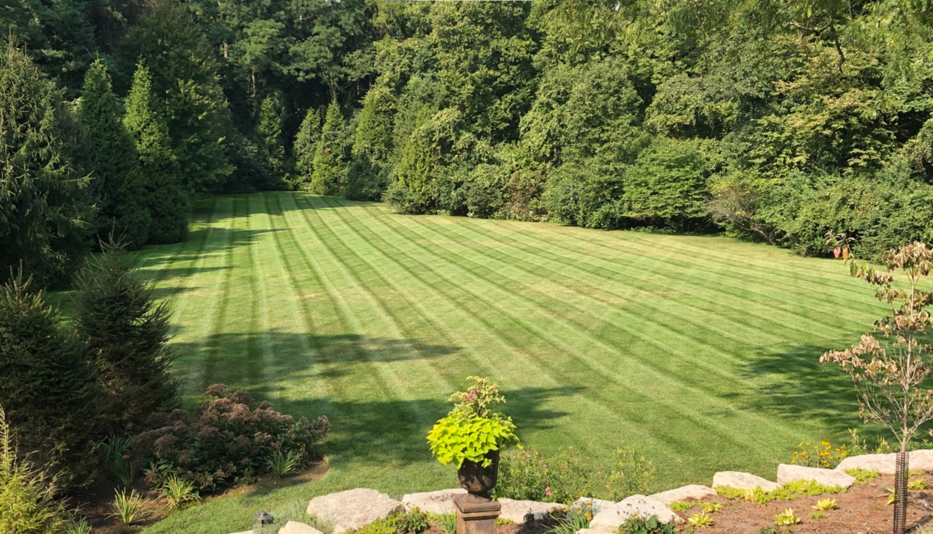 Fresh Mowed Lawn