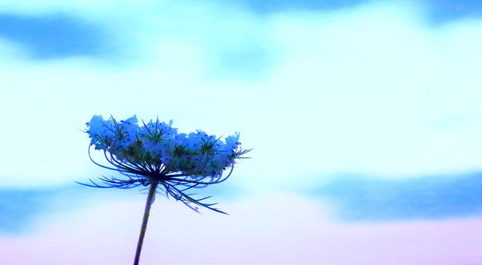flower-4051361_1920_edited_edited_edited_edited.jpg