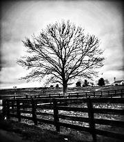tree b&w.jpg