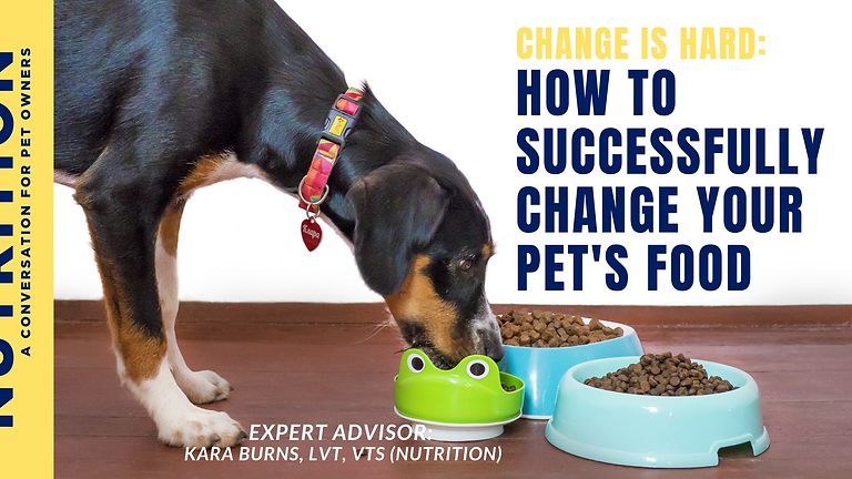 Nutrition: How to Easily Change Your Pet's Food