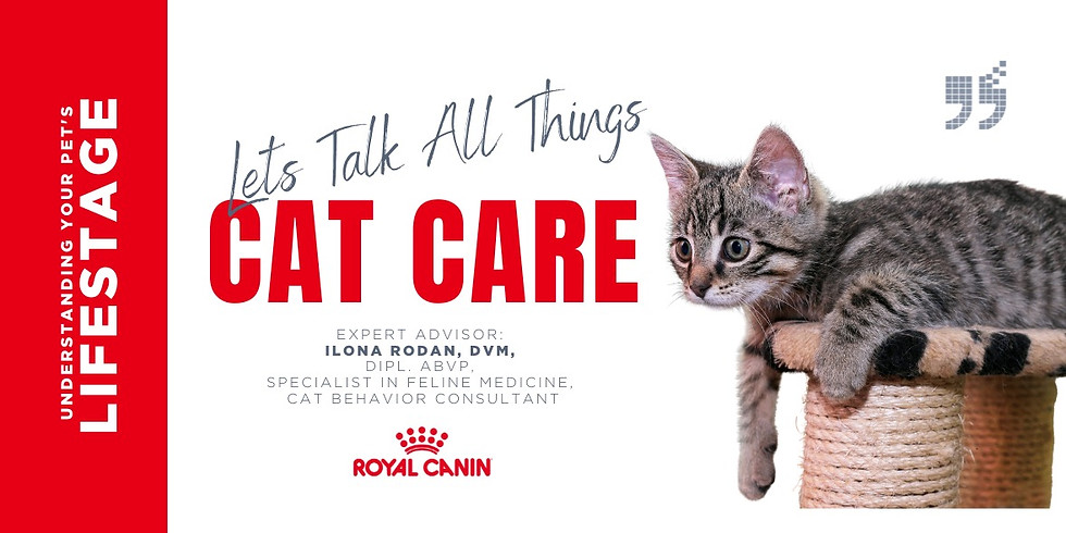 Let's Talk All Things Cat Care