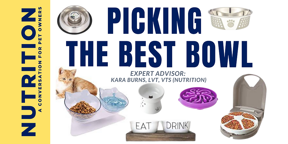 Picking the Right Bowl for Your Pet's Food