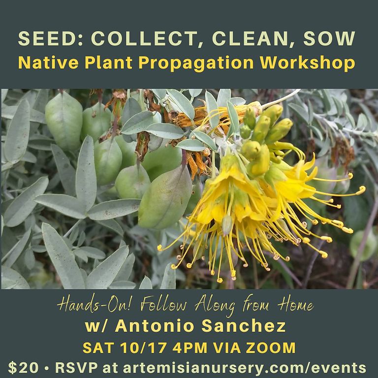SEED: Collect, Clean, Sow (Online Edition)
