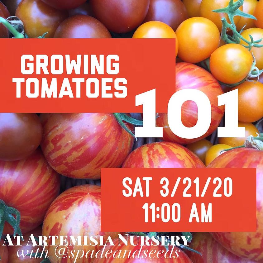 Growing Tomatoes 101 w/ Loretta Allison