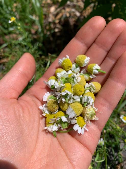 Handful of chamomile!
