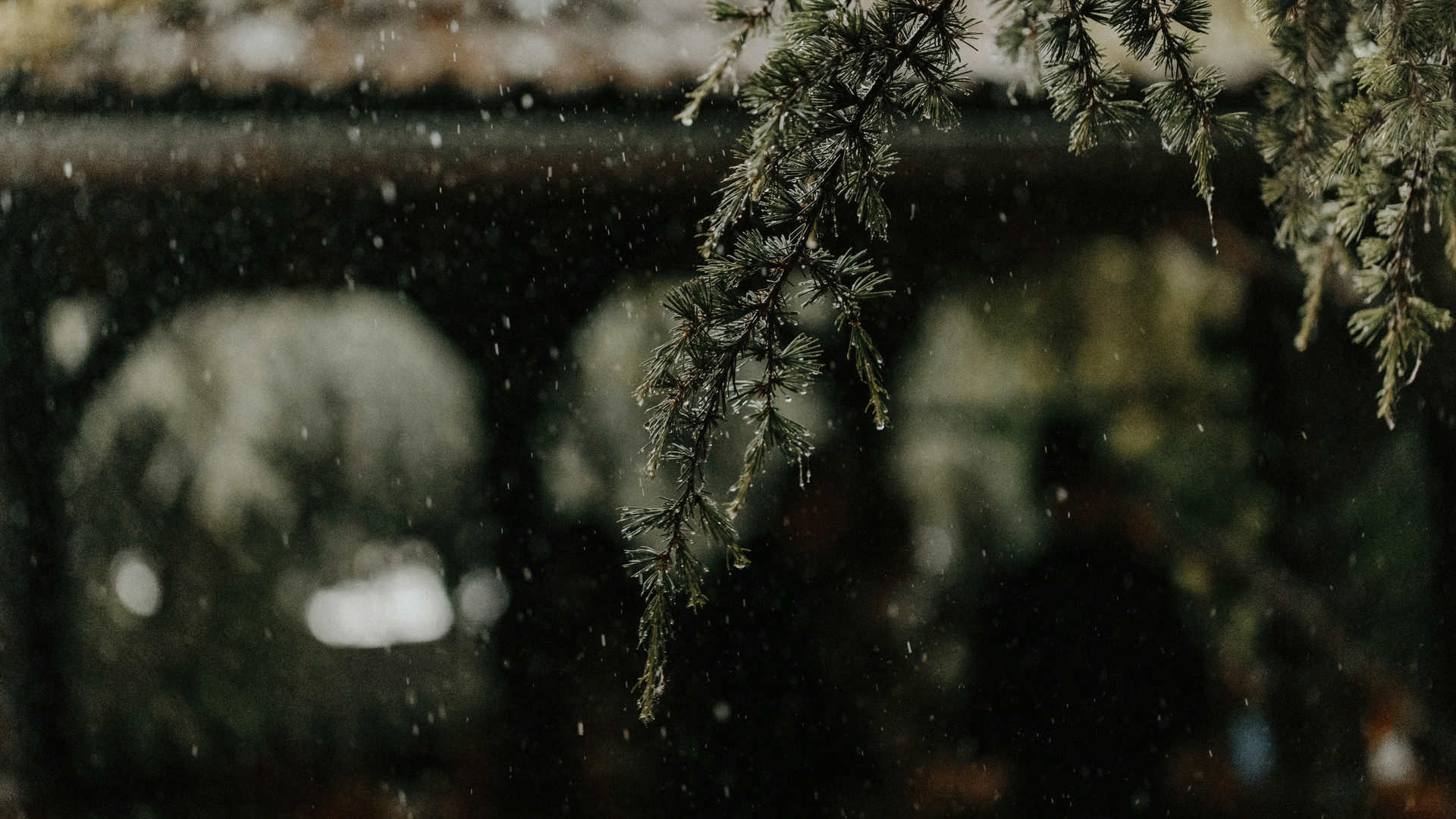 Bellon Pictures