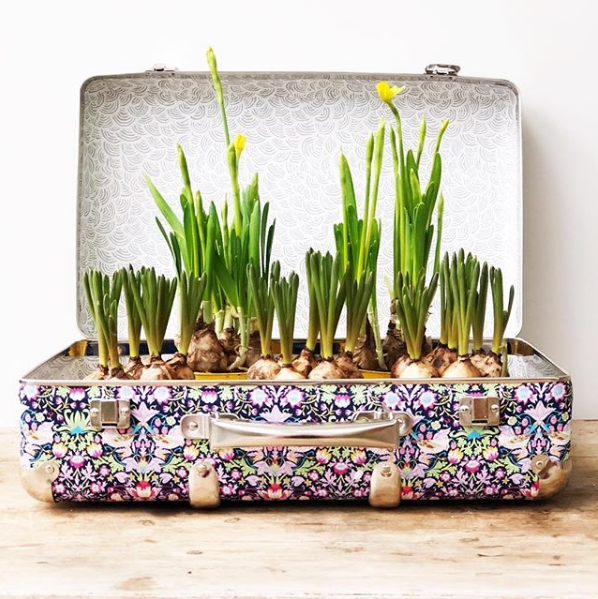 flowers in a suitcase by Emily Quinton