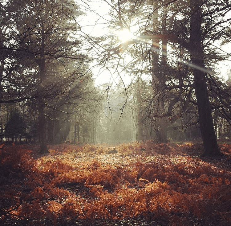 Photo of the New Forest